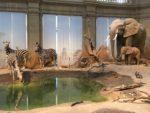 Museum König ausflug Bonn