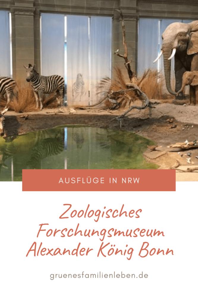 forschungsmuseum bonn pinterest