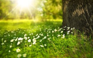 tipps nachhaltig leben blog