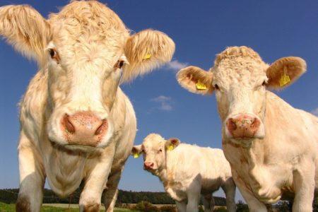 Klimawandel Fleischkonsum