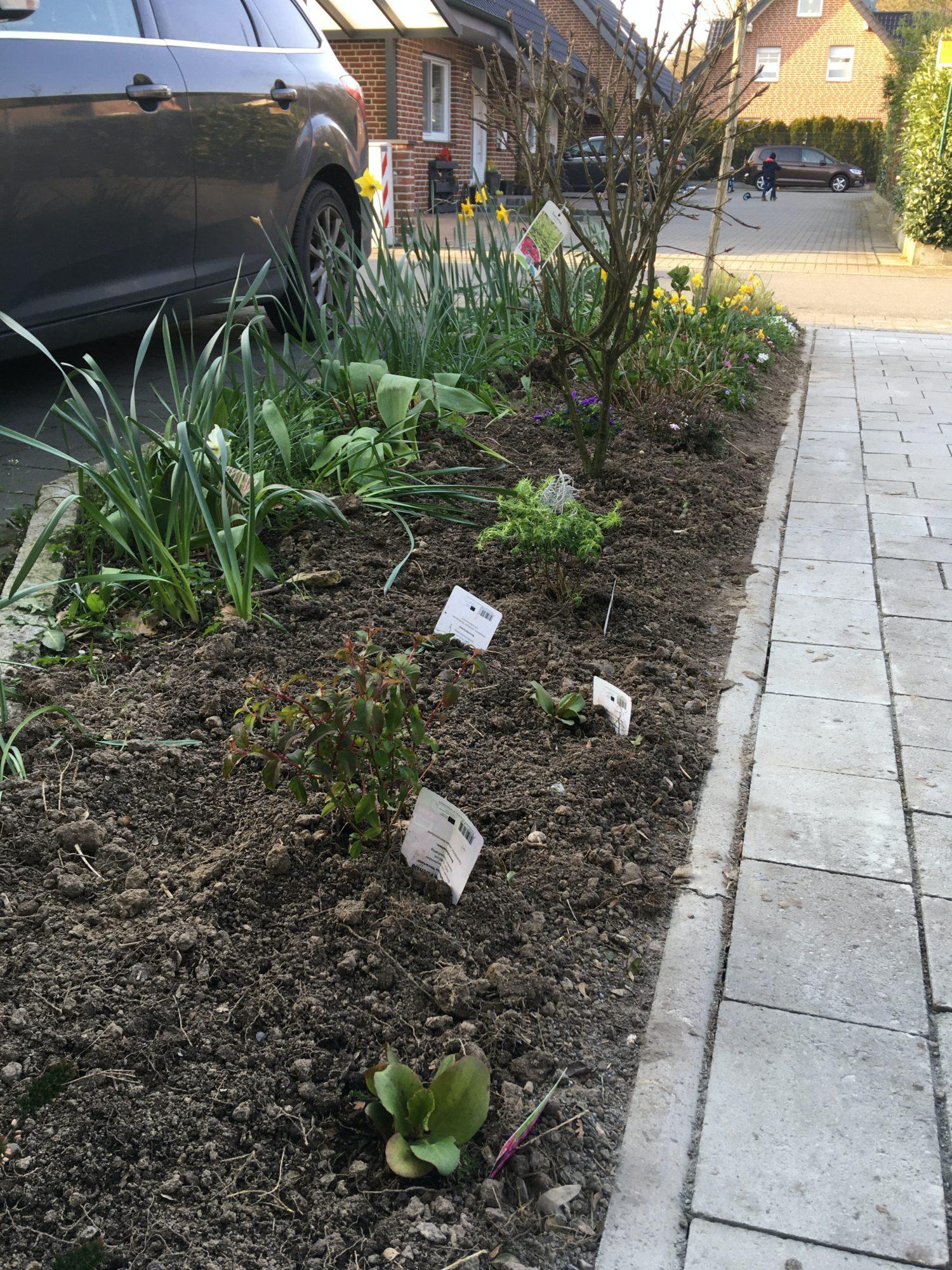 beet anlegen einfahrt schatten pflanzen scaled