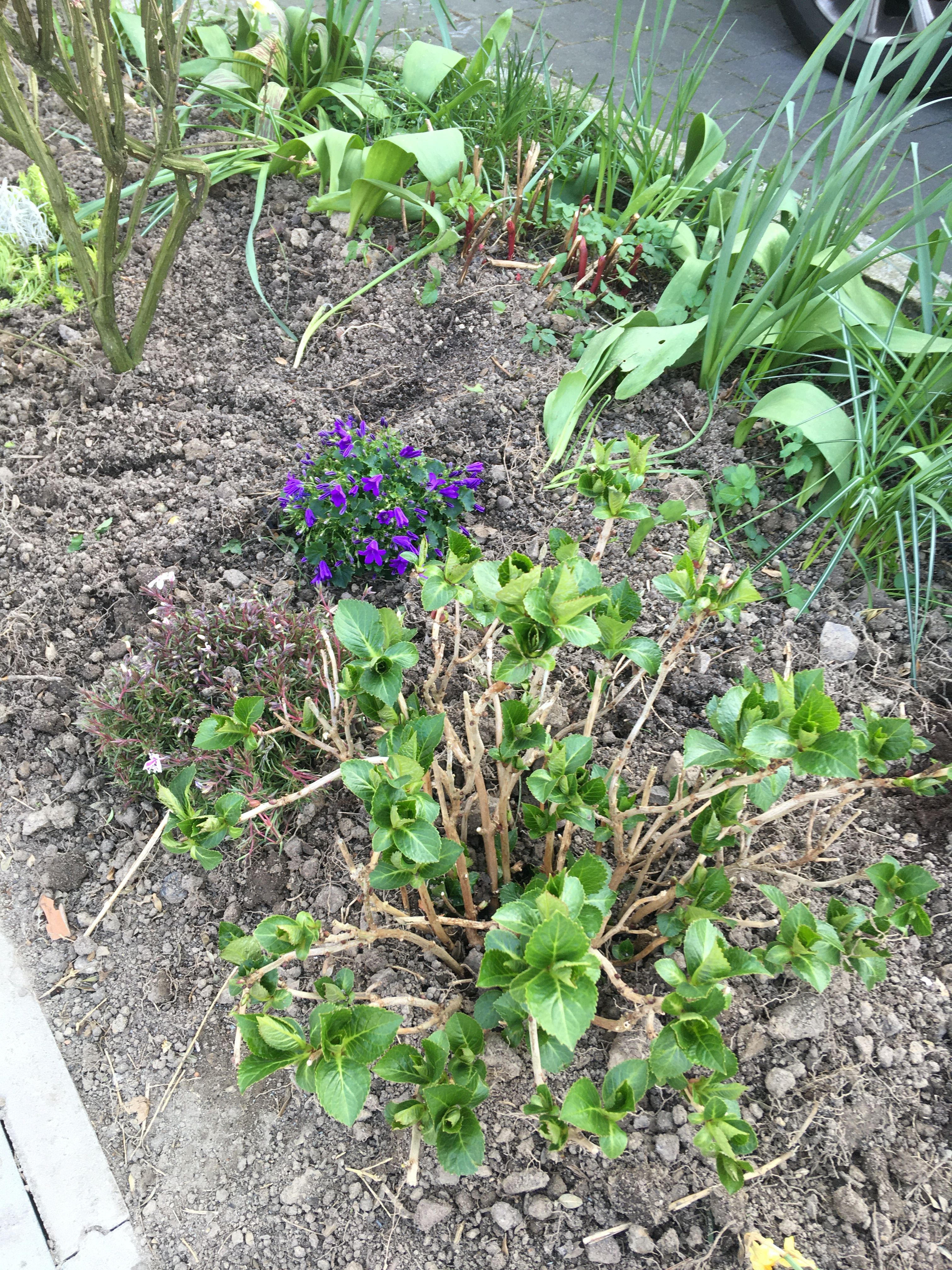 beet anlegen einfahrt schatten pflanzen halbschattig