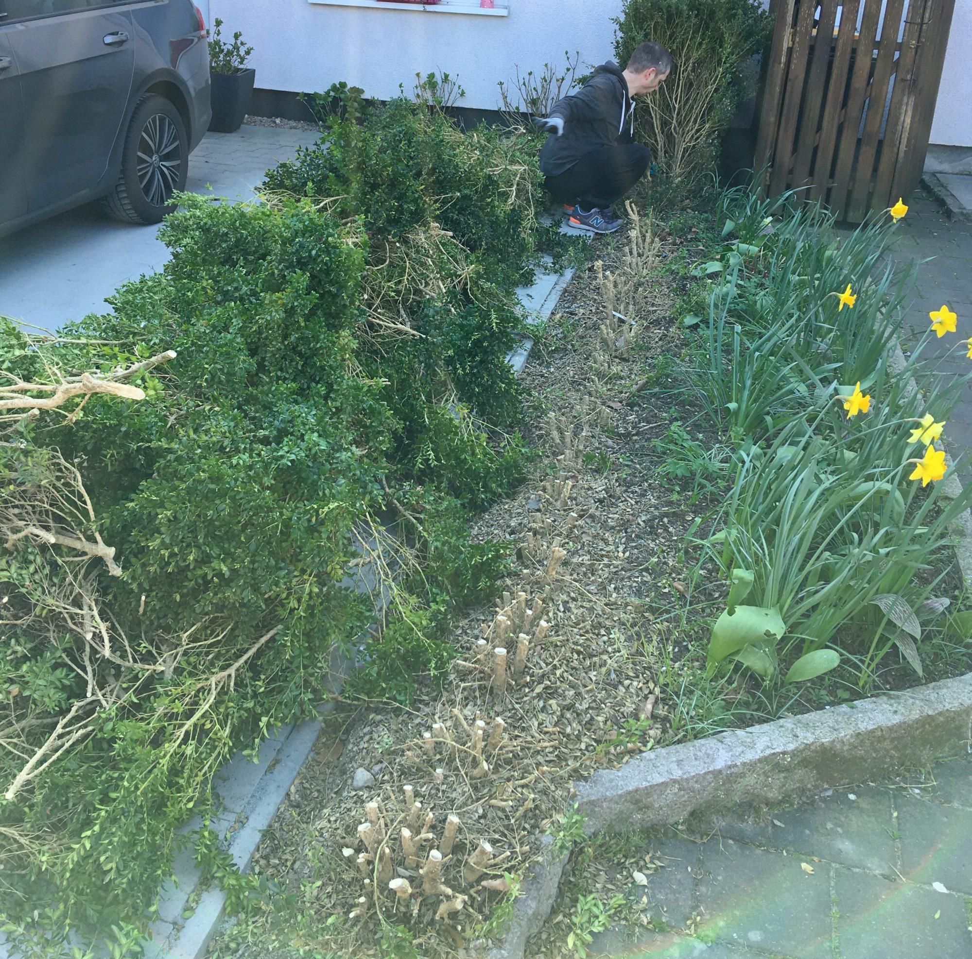 vorgarten verschoenern hecke buchsbaum entfernen scaled