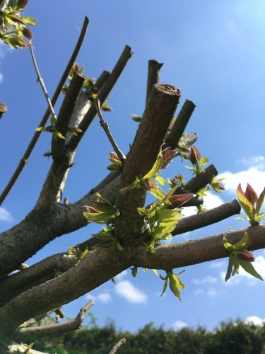 bunter garten april trompetenbaum