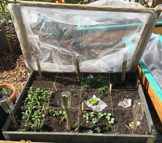 gemueseschutz selberbauen gemuesegarten kulturschutznetz