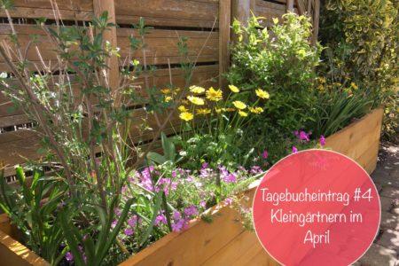 kleingaertnern tagebuch pflanzen april