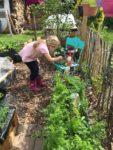 Gärtnern im Mai