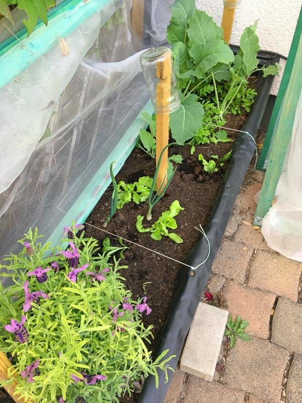Gemüse im Mai Mischkultur