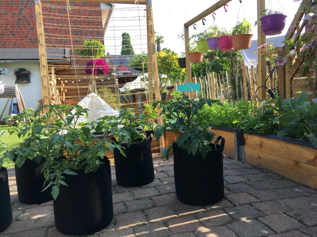 kleingaertnern squaregardening urbangardening mischkultur buschtomaten gurke haengetomaten