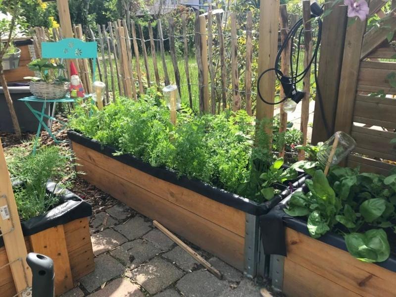 Gemüse im Mai Möhren