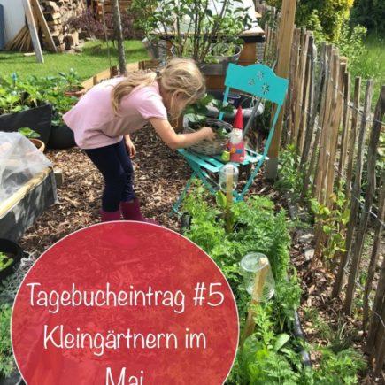 kleingarten mai tagebuch saen ernten 6