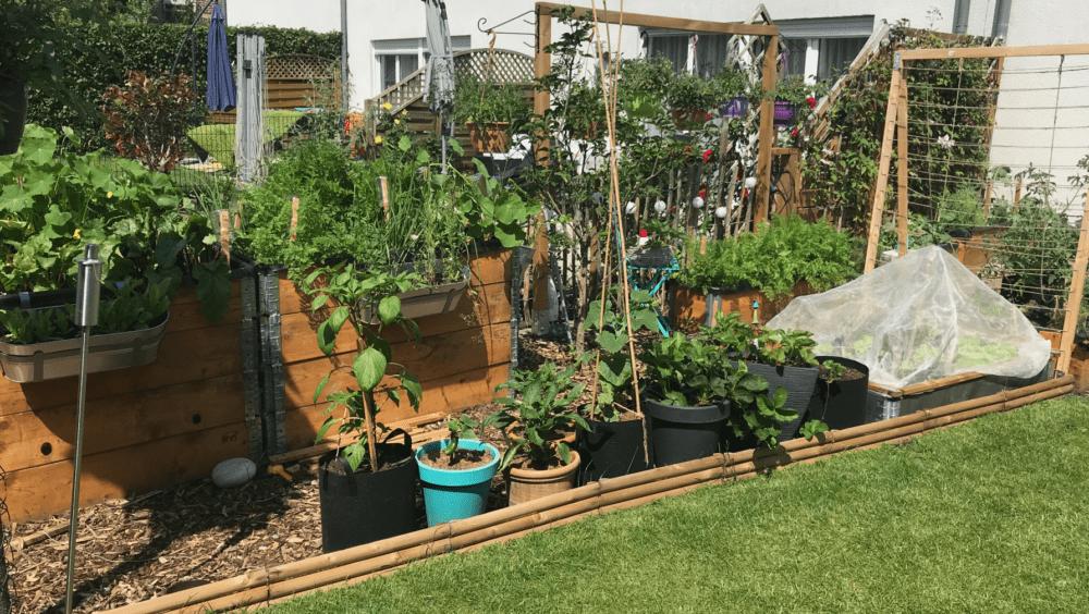 Gemuesegarten Kleingaertnern Blog