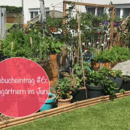 Gemuesegarten Kleingaertnern Blog Erfahrungen Tipps Urban Gardening