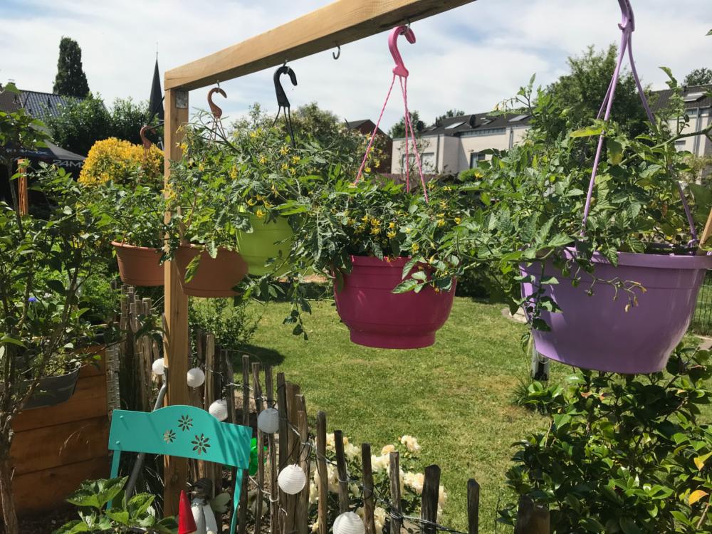 Gemuesegarten Kleingaertnern Blog Erfahrungen Tipps Urban Gardening Ampeltomaten Wildtomaten Sichtschutz