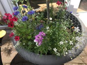 Gemuesegarten Kleingaertnern Blog Erfahrungen Tipps Urban Gardening Wildblumen