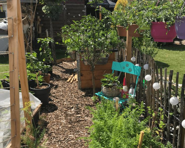 Kleingarten im Juni Gemüsegarten