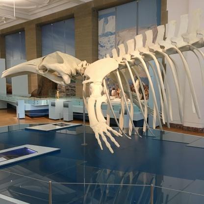 arktis antarktis museum koenig