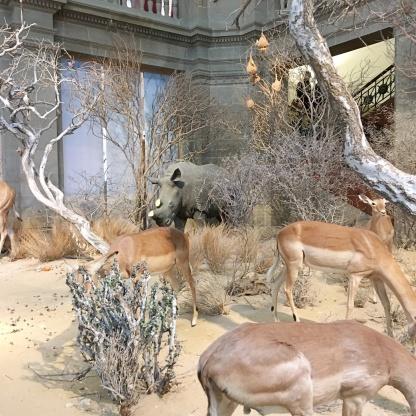 bonn muesum koenig savanne Familienausflug