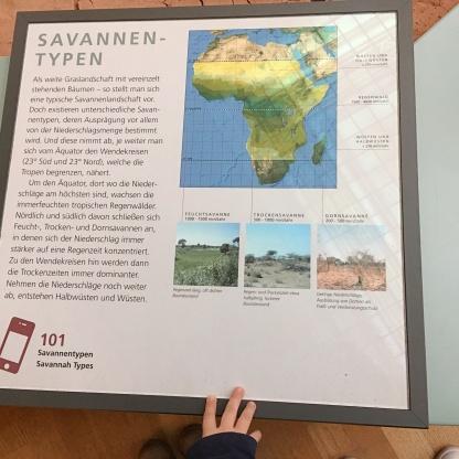 forschungsmuseum koenig ausflug bonn familie savannentypen