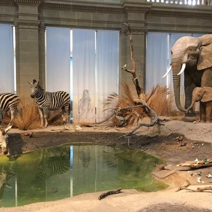 forschungsmuseum koenig savanne fuer kinder