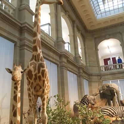giraffe forschungsmuseum koenig bonn kinder familienausflug