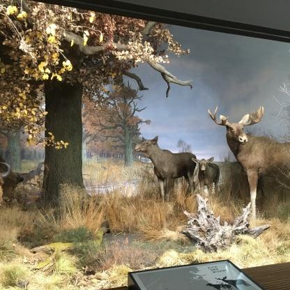 mitteleuropa museum koenig bonn