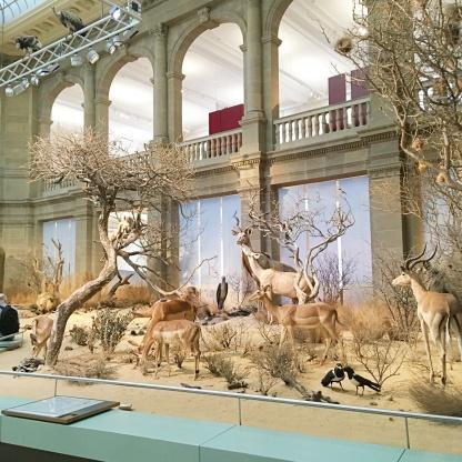 museum koenig artenvielfalt
