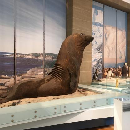 museum koenig artiks antarktis familienausflug
