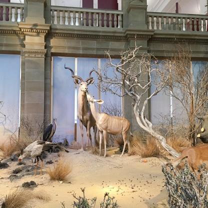 museum koenig bonn savanne