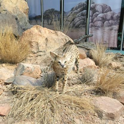 museum koenig savanne