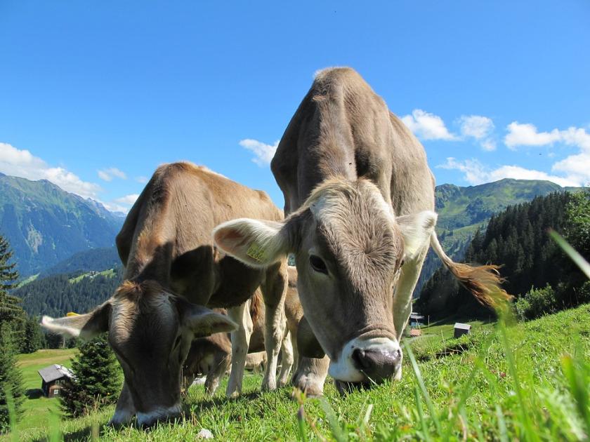 nachhaltigkeitsguide lebensmittel fleisch