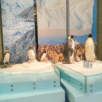 pinguine zoologisches museum koenig