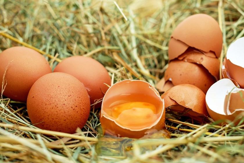 regional einkaufen eier