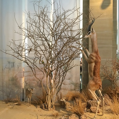 savanne muesum koenig bonn kinder