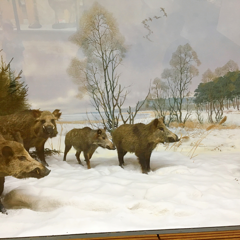 wildschweine mitteleuropa musuem koenig bonn