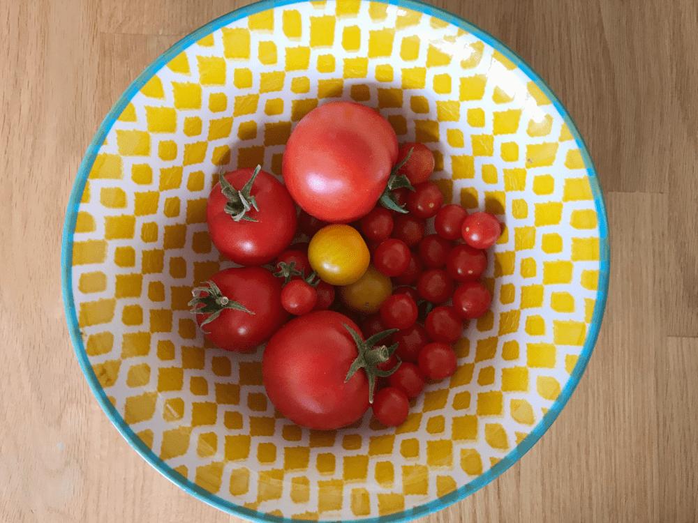 tomaten juli ernten