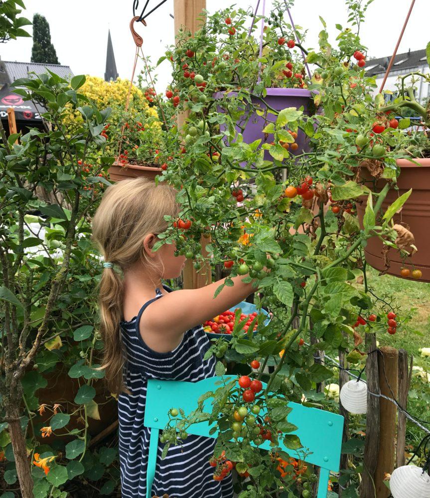 garten im august gemuesegarten 1
