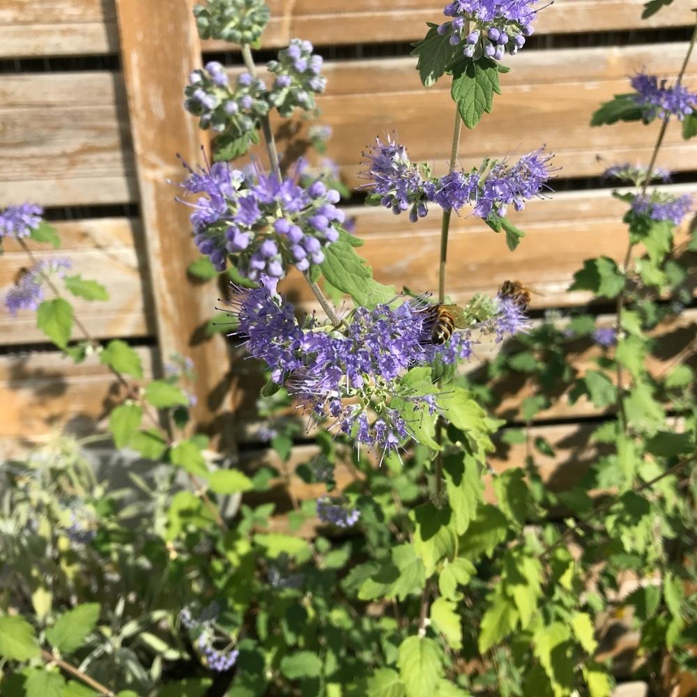 Bienen Blumen