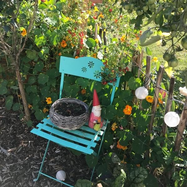 kapuzinerkresse Kleingarten september