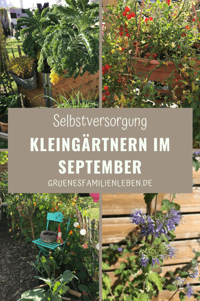 Kleingarten September