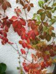 Kleingarten Oktober